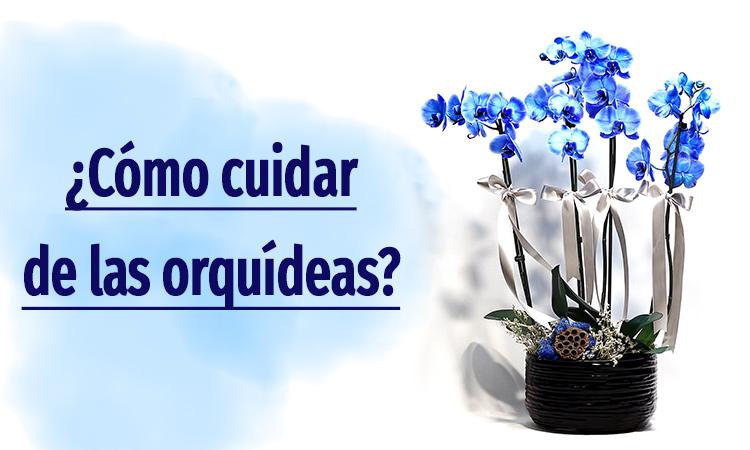 Mantenimiento de la orquídea Phalaenopsis