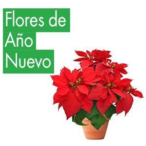 Flores de año nuevo